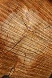 Anneaux et grain de croissance d'arbre Image libre de droits