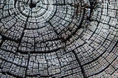 Anneaux noirs et blancs de tronçon d'arbre images stock