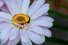 anneaux sur l'amour Valentine& x27 de marguerite blanche ; gerbera de jour de s et or de mariage Images stock