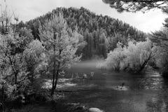 Annebbi al fiume di Katun, la riserva naturale di Biospheric dello stato di Altai, Russ Immagini Stock Libere da Diritti