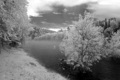 Annebbi al fiume di Katun, la riserva naturale di Biospheric dello stato di Altai, Russ Immagine Stock Libera da Diritti