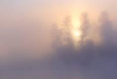 Annebbi gli alberi dell'alba Fotografia Stock