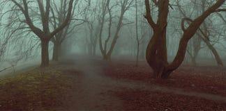 Annebbi il fogliame di caduta mistycal degli alberi di autunno del vicolo del parco del fondo Fotografie Stock Libere da Diritti