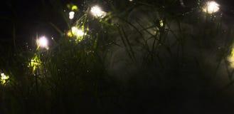 Annebbi l'aumento dalla terra attraverso erba accesa con le luci leggiadramente immagini stock