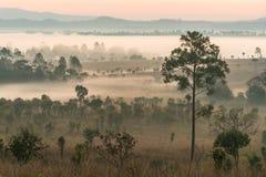 Annebbi la copertura delle foreste della montagna sulla mattina Immagini Stock