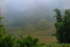 Annebbi la copertura delle risaie in Sapa, Vietnam del Nord Immagine Stock