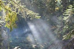 Annebbi le rocce e la foresta delle montagne carpatiche in Ucraina Immagine Stock Libera da Diritti