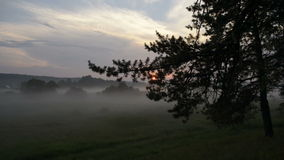 Annebbi nel campo su un fondo del tramonto archivi video