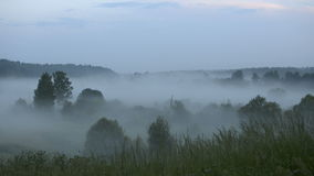 Annebbi nel campo su un fondo del tramonto video d archivio