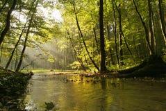 Annebbi sopra il flusso nella foresta di autunno Fotografie Stock