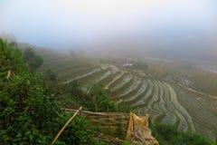 Annebbi sopra una risaia in Sapa, Vietnam Immagine Stock
