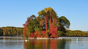 Annecy湖在法国,秋天颜色 股票视频