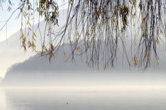 树叶子在Annecy湖的在法国 免版税库存照片