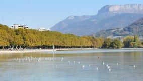 Annecy sjö i Frankrike Fåglar på vattnet lager videofilmer