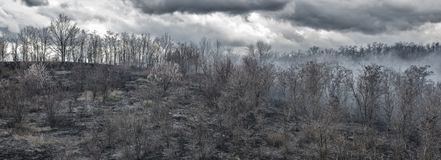 Annerisca gli alberi carbonizzati nel fumo dopo il fuoco nella valle i precedenti tristi delle nuvole Fotografia Stock Libera da Diritti