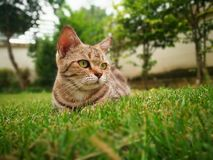 3 anni di gatto Fotografie Stock