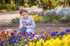 7 anni di ragazzo esamina i fiori variopinti Fotografia Stock