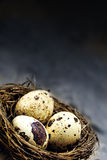Annidi nell'angolo con tre uova contro un vintag rustico scuro Immagine Stock Libera da Diritti