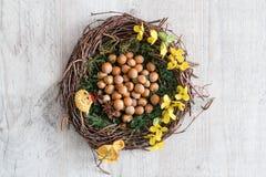 Annidi in pieno delle nocciole e badian in muschio con i fiori gialli ed elementi di decorazione fotografie stock libere da diritti