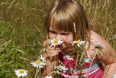 Annie Meadow e. Little girl in meadow smelling flowers Royalty Free Stock Images