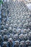 Anniversaire royal malaisien d'armée quatre-vingtième Photographie stock libre de droits