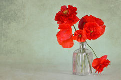 Anniversary card with red poppies in a vase. On grunge background Royalty Free Stock Photo