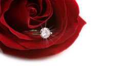 Anniversary diamond ring. In red rose. With copyspace Stock Image