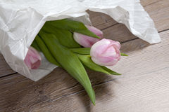 Anniversary pink tulip bouquet wrapped in white paper. Top view at bunch of fresh tulips, image concept for wedding blog, mothers Royalty Free Stock Photos