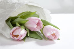 The Anniversary pink tulip flower bouquet wrapped in white paper Stock Photography