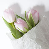 The Anniversary pink tulip flower bouquet wrapped in white paper Stock Photos
