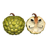 Annona 3D Royalty Free Stock Photography
