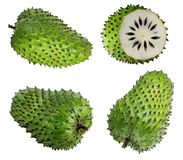 Annona muricata Fruit de corossol hérisse image stock