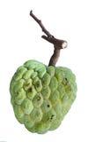 Annona reticulata fruit Stock Photos