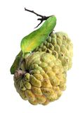Annona reticulata Royalty Free Stock Photography