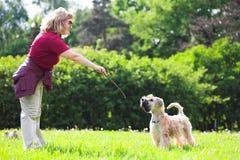 Annonce de femme son crabot sur l'herbe verte Image libre de droits