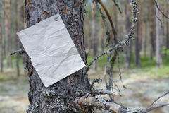 An announcement, a letter, a message on a tree in the forest Stock Image