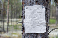 An announcement, a letter, a message on a tree in the forest Stock Photos
