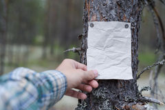 An announcement, a letter, a message on a tree in the forest. Stock Image