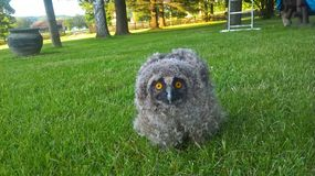 Annoyed bird of owl stock photos