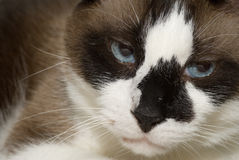 Annoyed Cat stock photography