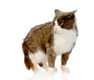 Annoyed cat.  on white background Royalty Free Stock Photos