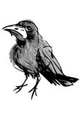 Annoyed crow. A vectorized drawing of an annoyed crow Stock Images