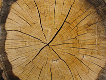 Annual 2. Close-up of tree rings Stock Photos