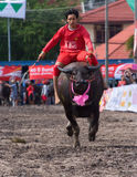 Annual Buffalo Races in Chonbburi 2009 Royalty Free Stock Image