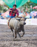 Annual Buffalo Races in Chonburi 2009 Stock Photos