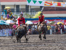 Annual Buffalo Races in Chonburi 2009 royalty free stock images