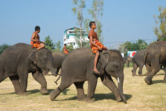 The Annual Elephant Roundup in Surin, Thailand. SURIN - NOVEMBER 21: Young mahout on small elephant during The Annual Elephant Roundup on November 21, 2010 in Stock Photography