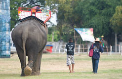 The Annual Elephant Roundup in Surin, Thailand Stock Photos