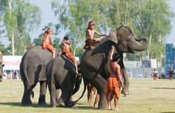 The Annual Elephant Roundup in Surin, Thailand. SURIN - NOVEMBER 21: Young mahout trainees and baby elephants showing their skills during The Annual Elephant Royalty Free Stock Image