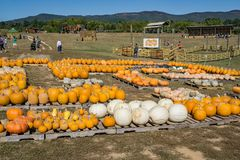 Annual Fall Festival. Blue Ridge, Virginia USA – September 30th: Children and adults enjoying the annual Fall Festival at Layman Family Farm located in stock images